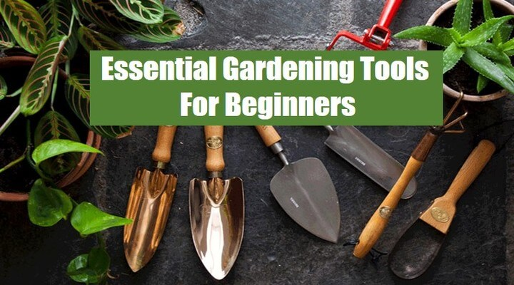 15 Essential Gardening Tools For Beginners (Must Have)