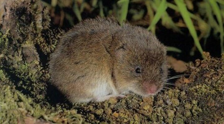 How to Get Rid of Voles in the Garden (7 Natural & Fast Ways)