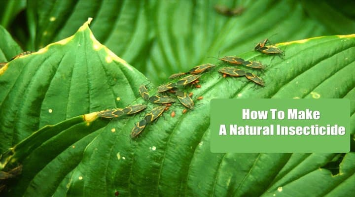 How To Make A Natural Insecticide