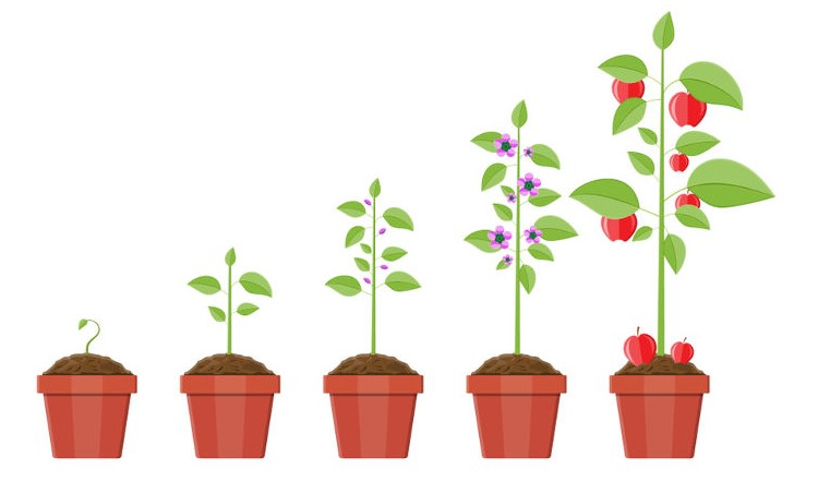 How to Grow a Potted Apple Tree