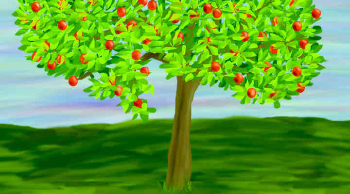 How to Plant Grafting & Seeded Apple Tree in Ground or Pot
